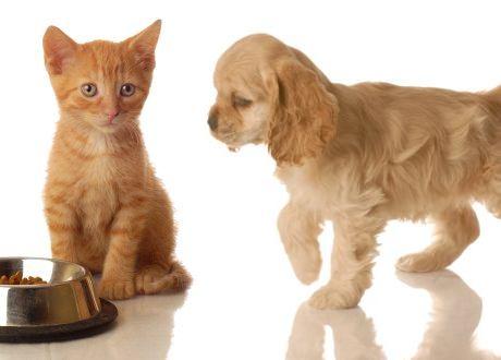 hond kattenvoer